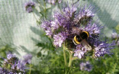 Laat bijen in Bodegraven-Reeuwijk zoemen
